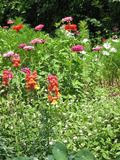 Spring_flower_garden